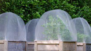 病害虫の予防と対策をして大切な植物を守ろう!